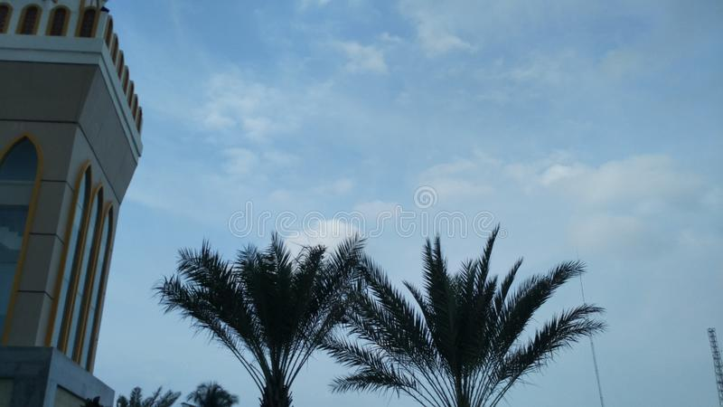 Green palm trees in the mosque garden with blue sky background. stock photography