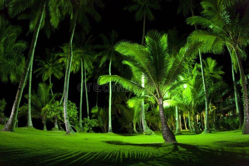 Green Palm Trees at Night royalty free stock photos