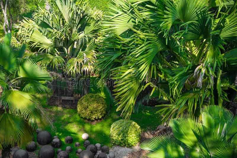 Green palm trees and stone in nature. Green palm trees in nature vector illustration