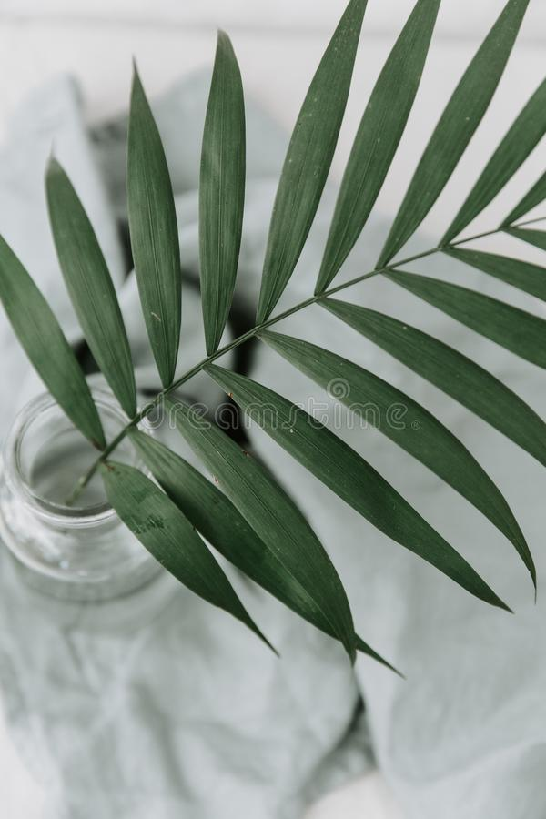 Green palm tropical branch in bottle. stock photography