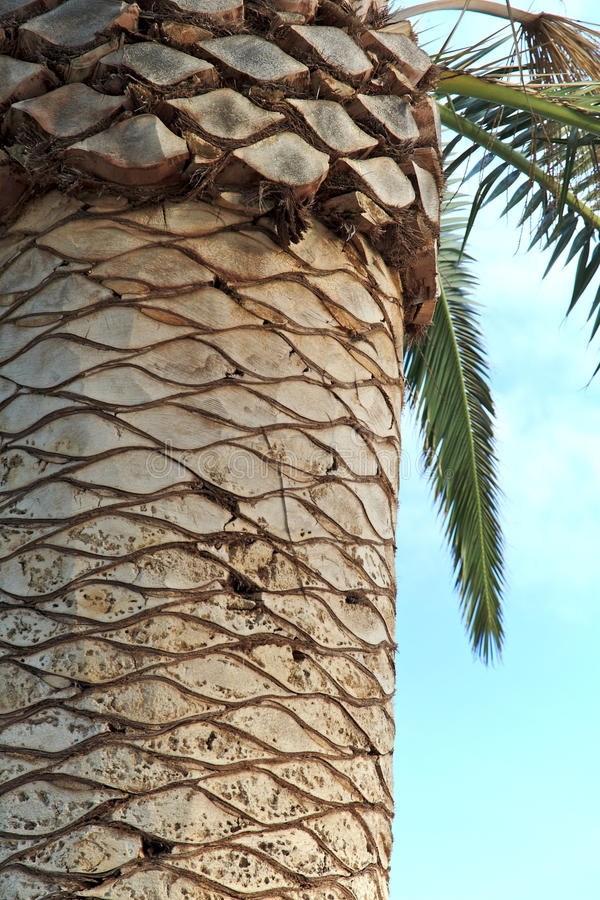 Green Palms in Perth, Australia. Green Palms beside Swan River in Perth, Western Australia stock image
