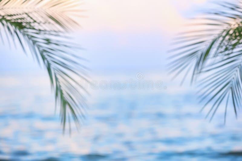 Green palms at sea resort, blurred view royalty free stock photos