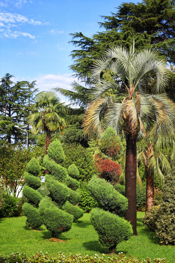 Green Palms and trees in Batumi stock photos