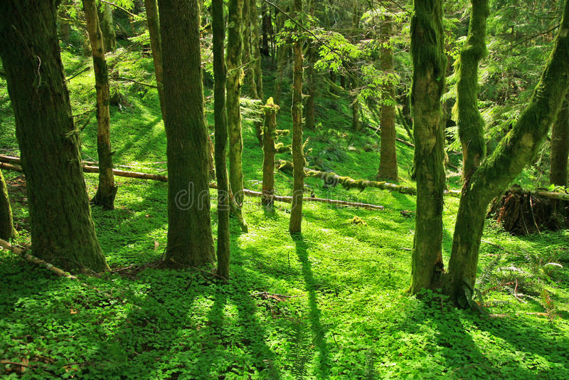 Download Green Paradise stock image. Image of tree, clovers, patches - 19229087