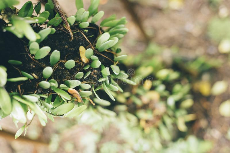 Green parasite plant on a tree royalty free stock photo
