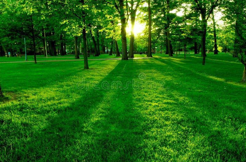 green park fotografia stock