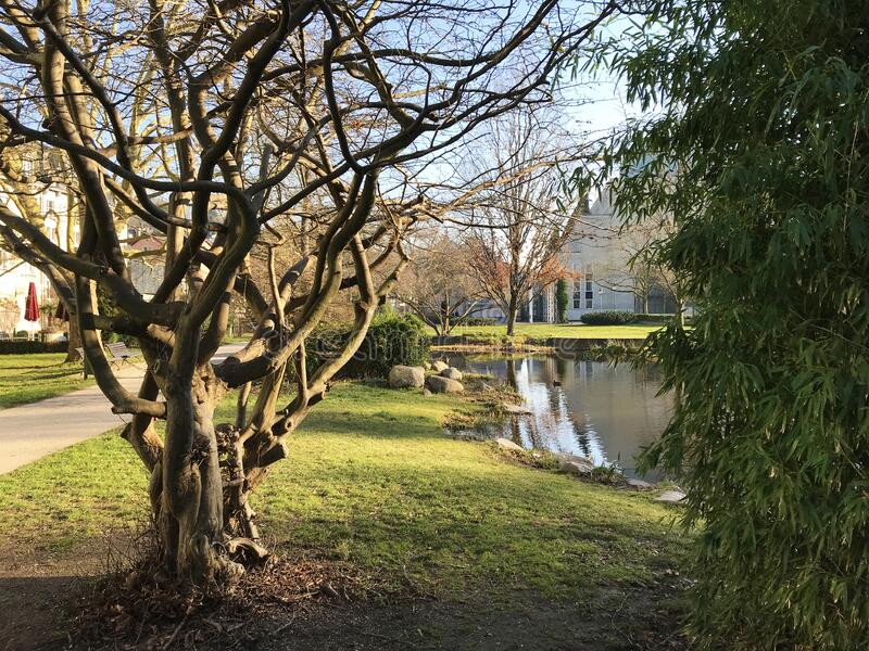 Green park Baden-Baden, Germany. Green park with a pond Baden-Baden, Germany stock image