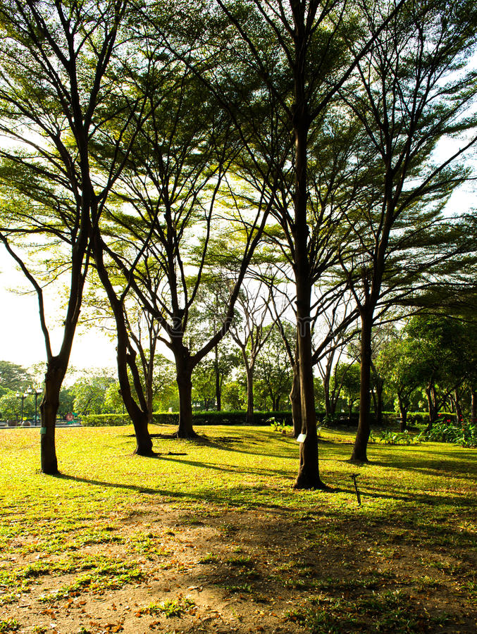 Download Green park in the spring stock image. Image of lush, branches - 36710681