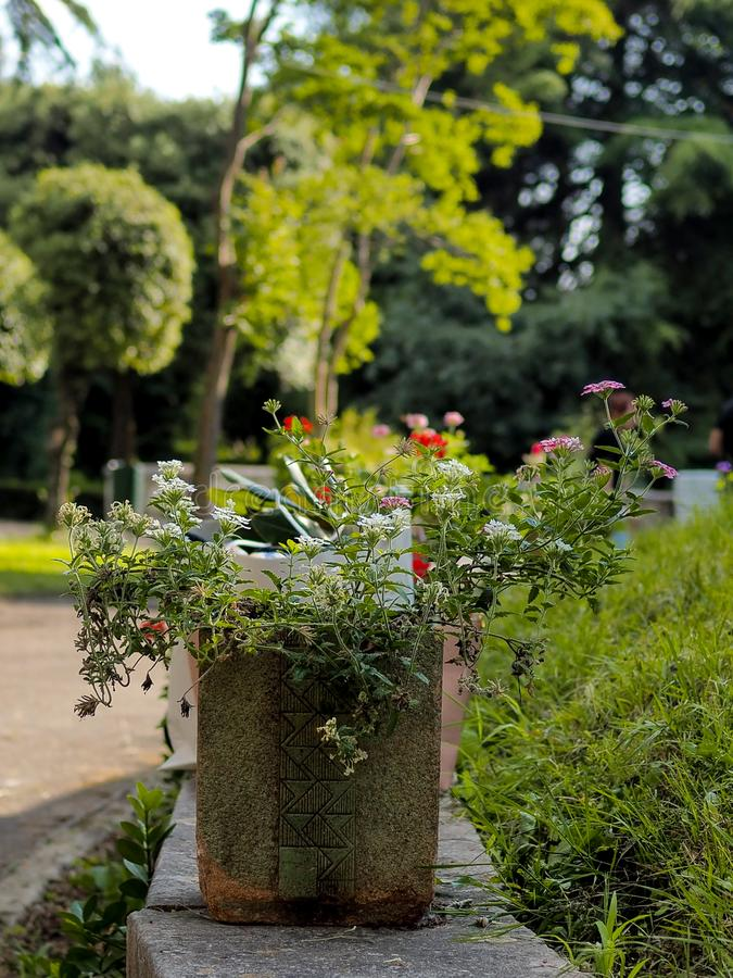 Green park in sunny day royalty free stock photo