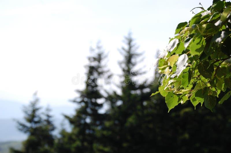 Green park tuscany mount stock image