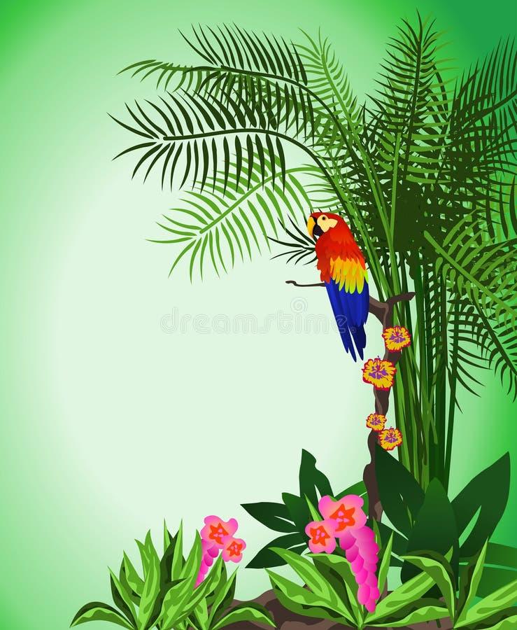Green Parrot Background Stock Photos