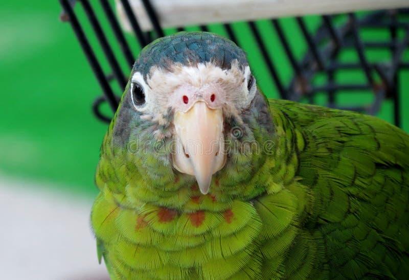 Green parrot stock photo