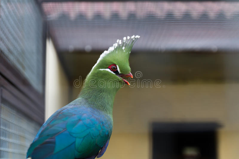 Green parrot head royalty free stock images