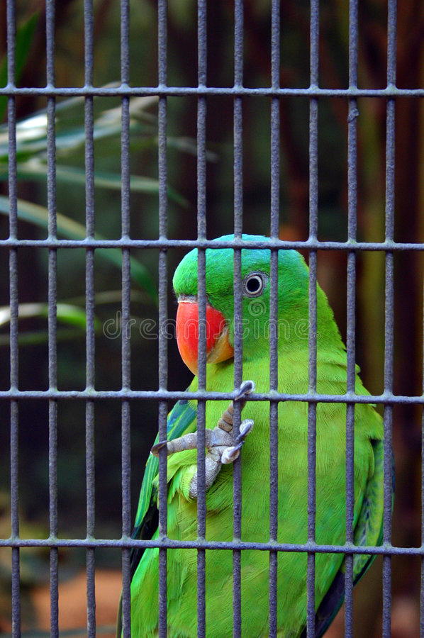 Free Green Parrot In Cage Stock Images - 5087984