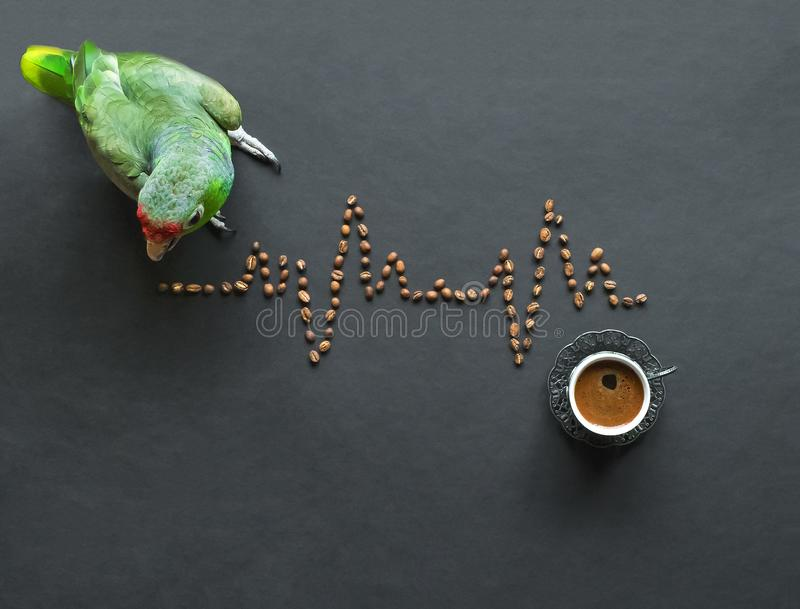 Green parrot learns a cardiogram of coffee beans on a black table. Funny medical concept royalty free stock photos