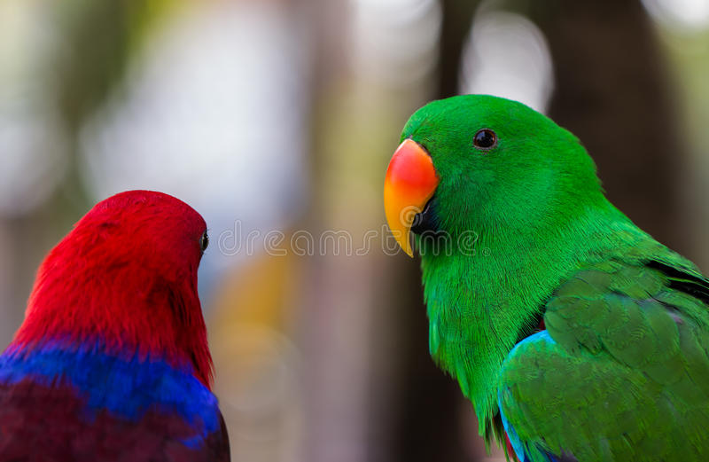 Green Parrot macaw. Background close up royalty free stock photo