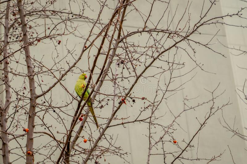 A green parrot sitting on branch stock images