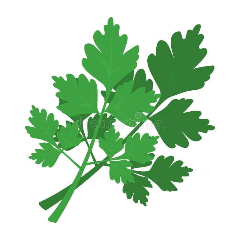 Green parsley branch. Fresh green healthy ingredient vector illustration