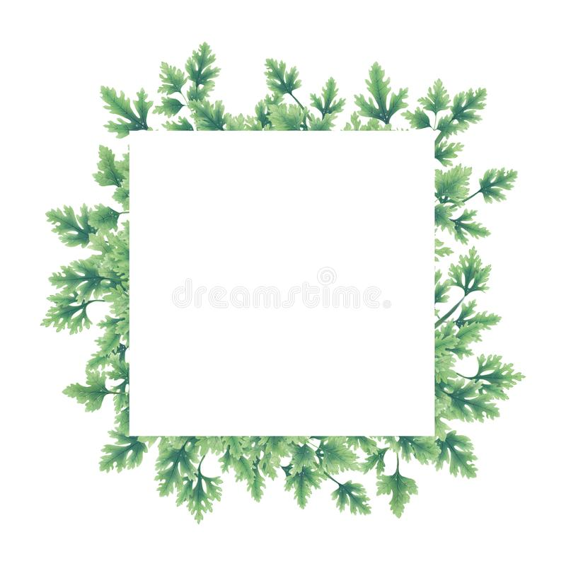 Green of parsley leaves at the borders vector illustration