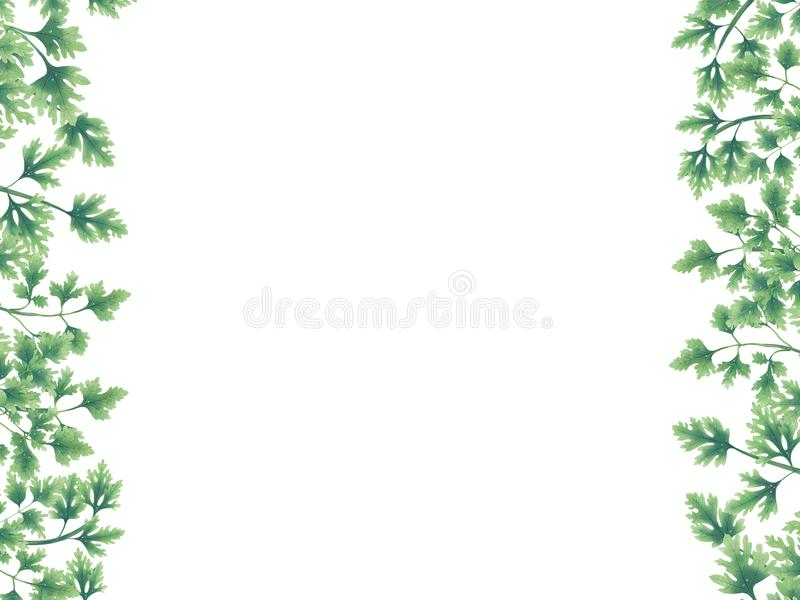 Green of parsley leaves at the borders stock illustration