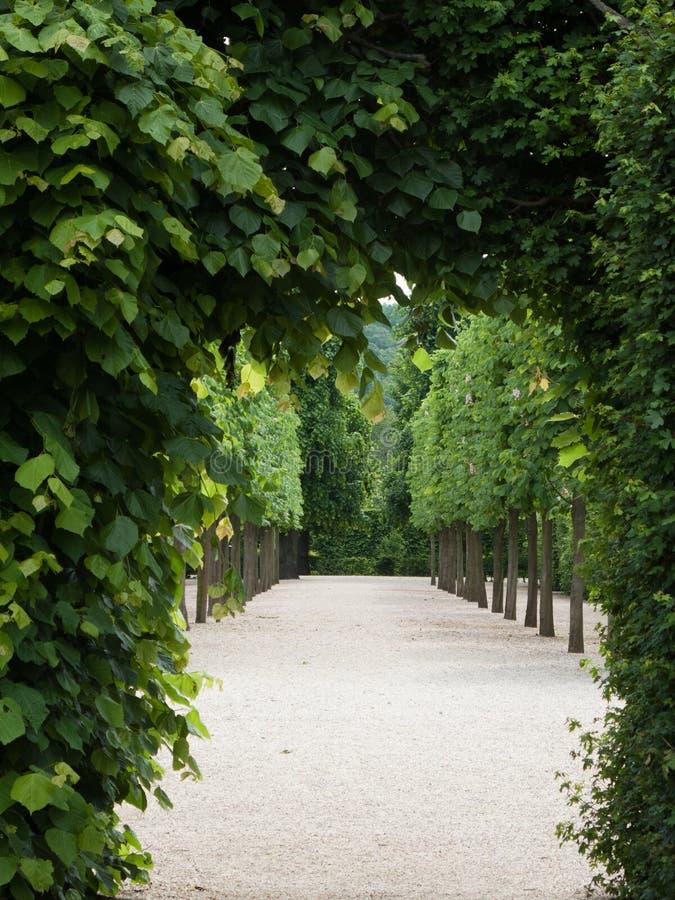 Green passageway stock images