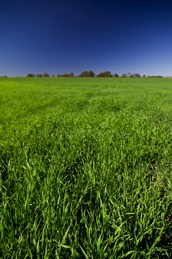 Download Green Pasture stock photo. Image of carbon, ethenol, grass - 15155148