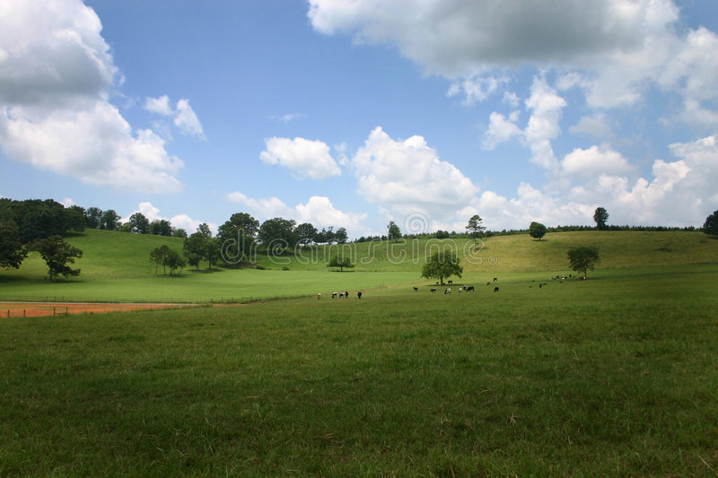 Green Pasture royalty free stock images