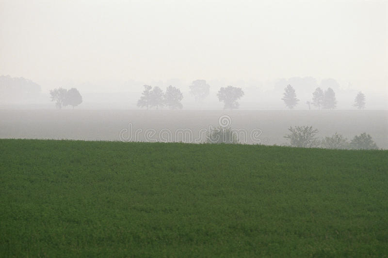 Download Green pastures stock photo. Image of horizon, color, foggy - 23160966
