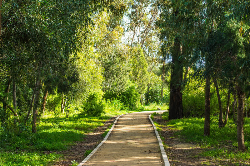 green path in the forest royalty free stock photos