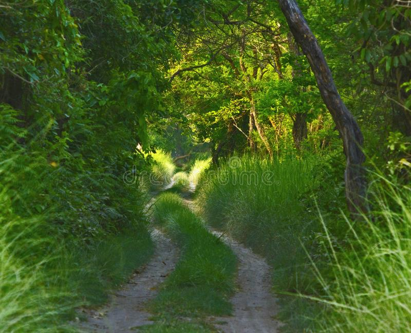Green path: A Forest safari trail in Dhudwa National Park, India. Green path with magical lights: A Forest safari trail in Dhudwa National Park, India royalty free stock photo