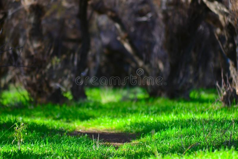 Green Path royalty free stock images