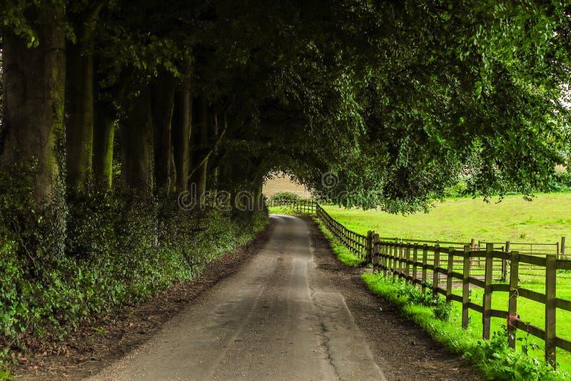 Green, Path, Road, Nature