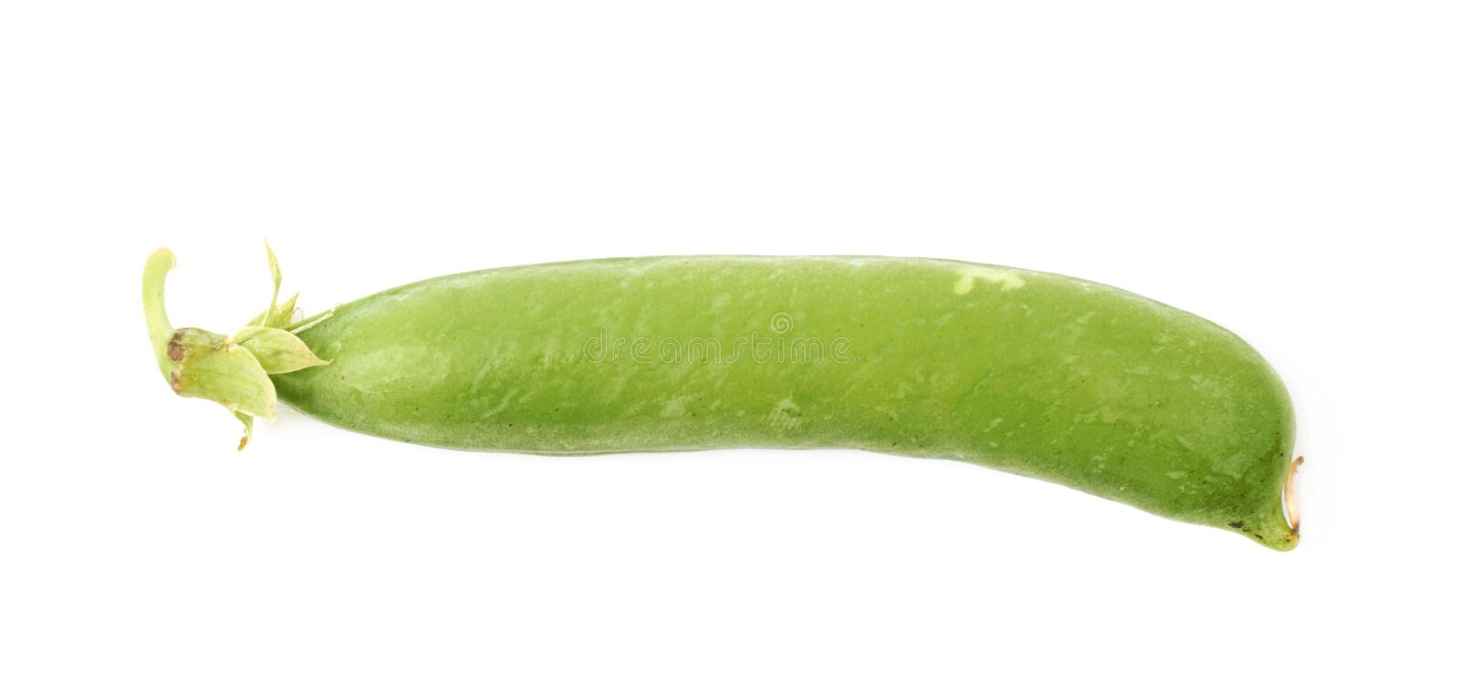 Green pea bean isolated royalty free stock photo