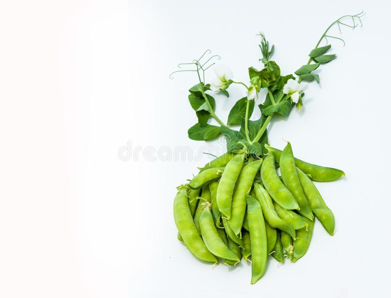 green pea. bush royalty free stock photos