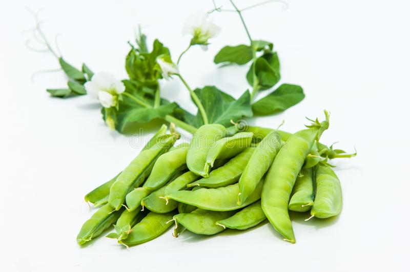 green pea. bush stock photography