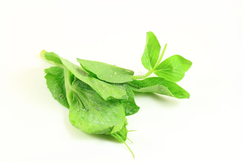 Download Green Pea Shoot stock image. Image of peas, fiber, shoots - 22865189