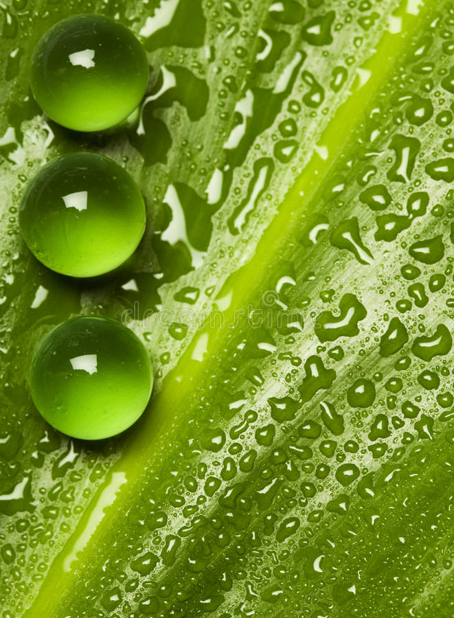 Green pearls on wet leaf stock photography