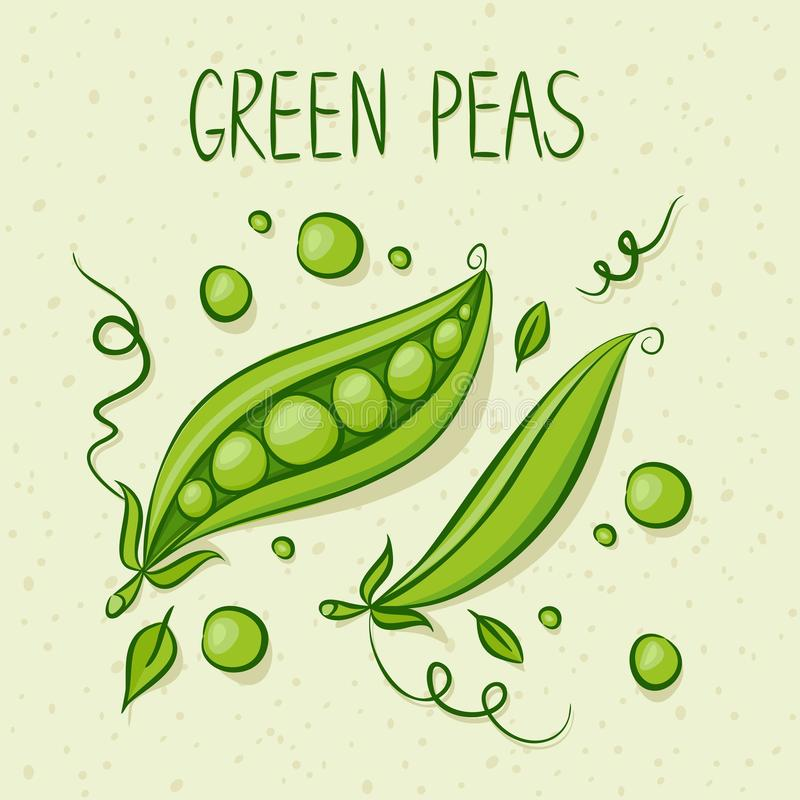 Download Green Peas stock vector. Image of eating, fruit, idea - 30028872