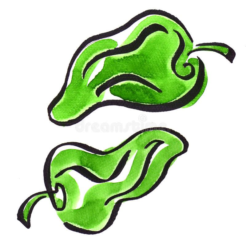Green pepper on white background, close up royalty free illustration