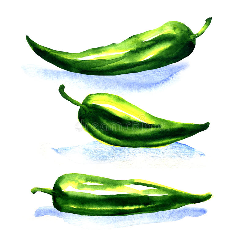 Green peppers isolated on a white background royalty free illustration