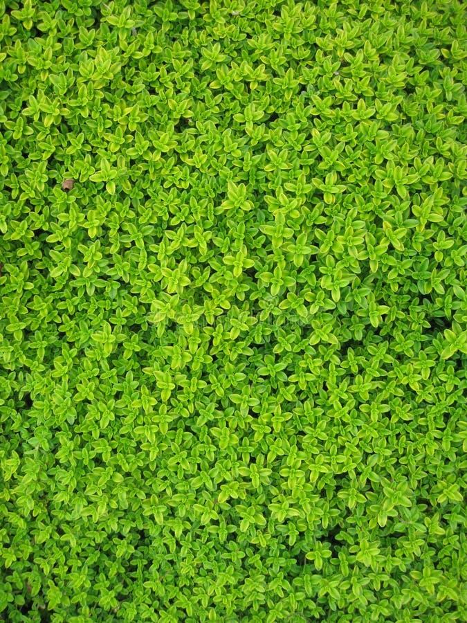 Green Petaled Flower Free Public Domain Cc0 Image