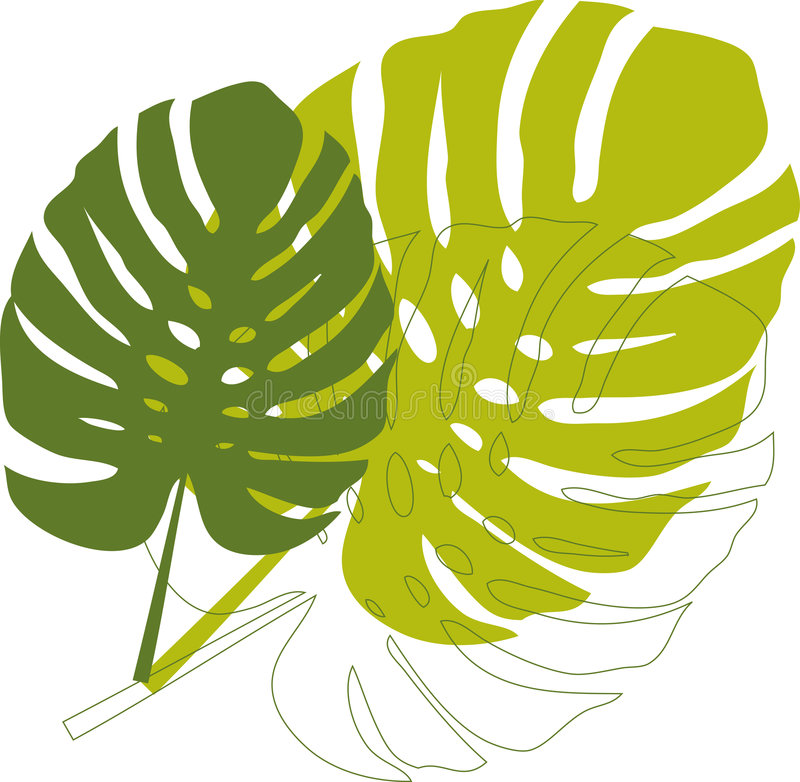 Download Green philodendron leaves stock vector. Illustration of colour - 2700452