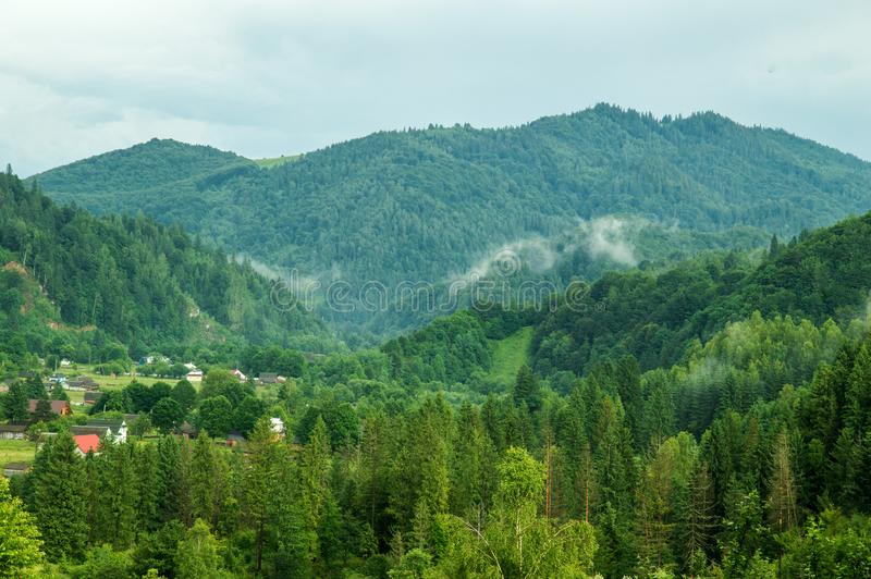 Green pine forest in the Carpathian mountains. The village is lost in the woods, light smoke fog spreads between the mountains royalty free stock images