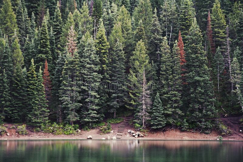 Green Pine Tree Beside Body Of Water During Daytime Free Public Domain Cc0 Image