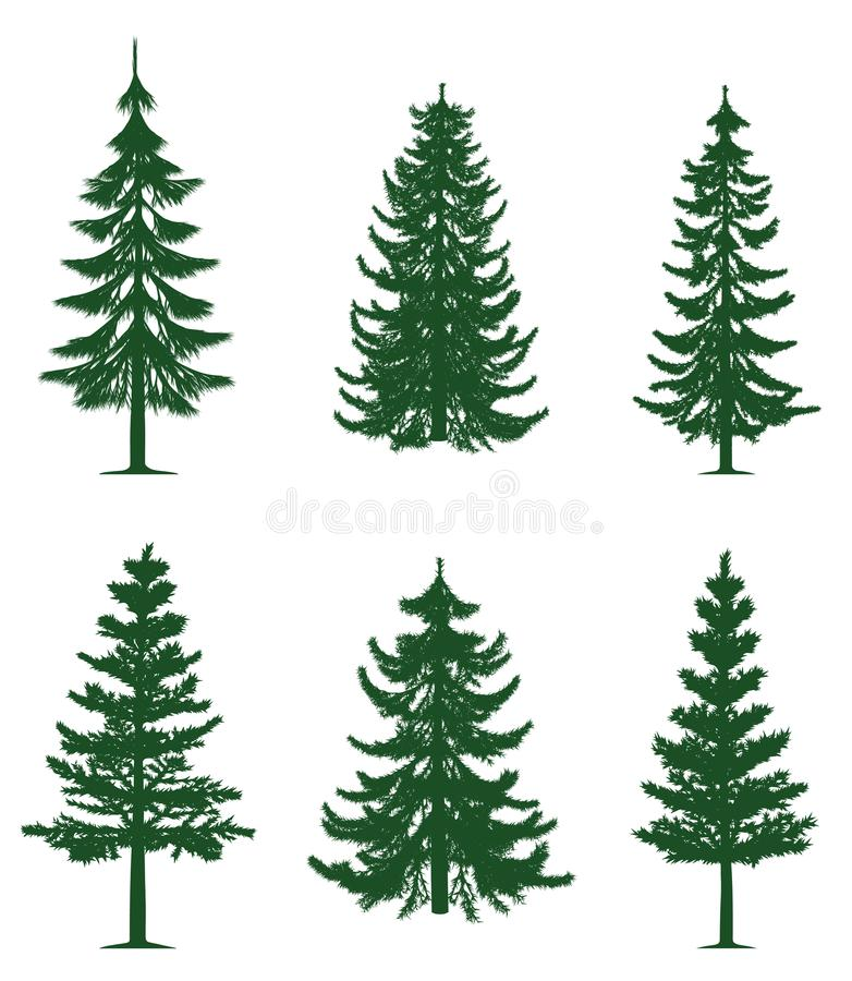 Green pine trees collection. Collection of 6 green pine trees. Isolated white background. EPS file available vector illustration