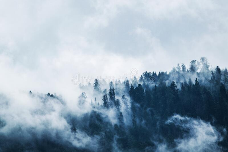 Green Pine Trees Covered With Fogs Under White Sky during Daytime royalty free stock photography