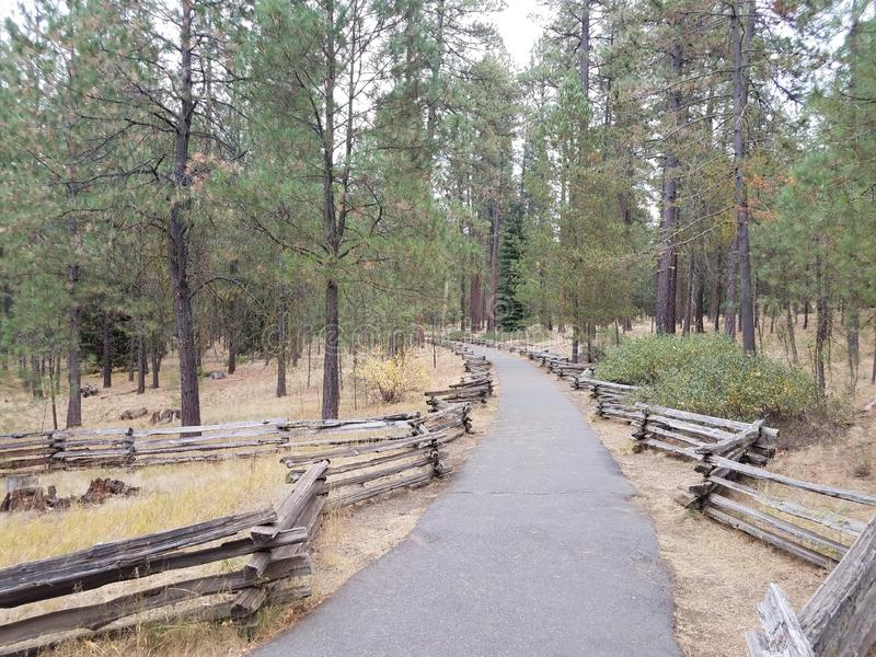 Green pine trees with curved asphalt path and wood fence. Green pine trees with curved asphalt path or trail and wood fence royalty free stock photos