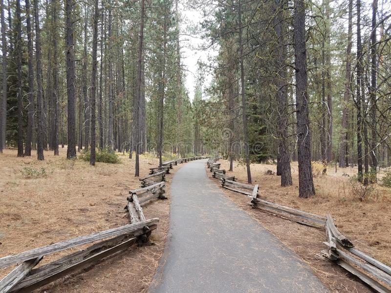Green pine trees with curved asphalt path and wood fence. Green pine trees with curved asphalt path or trail and wood fence royalty free stock images