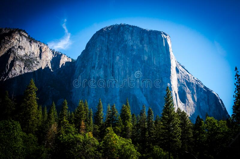 Green Pine Trees in Front of a Rock Mountain royalty free stock photo