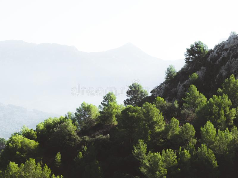 Green Pine Trees Near on Rock Formation stock photos